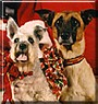 Sports, Sheena the Miniature Schnauzer, Greyhound
