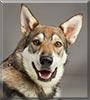 Logan the Dog
