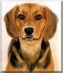 Lowiz the Schiller Hound, Beagle