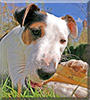 Ripley the Fox Terrier