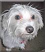 Serena the Dog