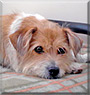 Buddy the Terrier mix