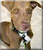 Canela the Dog
