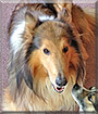 LeeRoy the Rough Collie