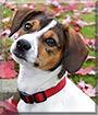 Rudy the Dog