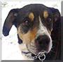 Queen Lizzy the Rottweiler/Labrador Mix