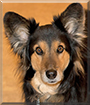 Kiyo the Dog
