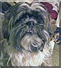 Frenchy the Shih Tzu