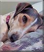 Gypsy the Dog