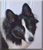 Lexie Lee the Dog