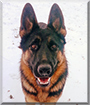 Maverick the German Shepherd