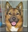 Ed the Australian Shepherd/Rottweiler