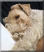 Duchamp the Wire Fox Terrier