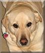 Dylan the Labrador Retriever