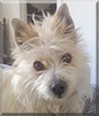 Oscar the Terrier mix