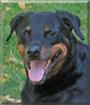 Haley the Rottweiler