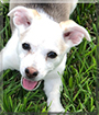 Ruby Renae the Beagle, Jack Russell Terrier