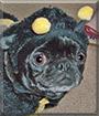 Leila the Pug