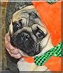 Tucker the Pug