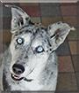 Kali the Catahoula Leopard Dog mix