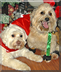 Teddi, Benji the Dogs