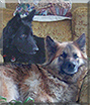 Nina, Jerry Lee the German Shepherds