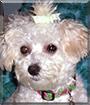 Emma Kay the Small Dog