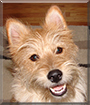 Wiley the Terrier mix