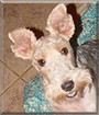 ChiChi the Wire Fox Terrier