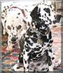 Bucky and Gabby the Dalmatians