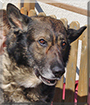 Artus the Dog
