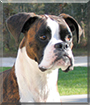 Champ the Boxer