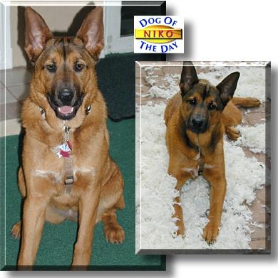 Niko Dog Name Meaning